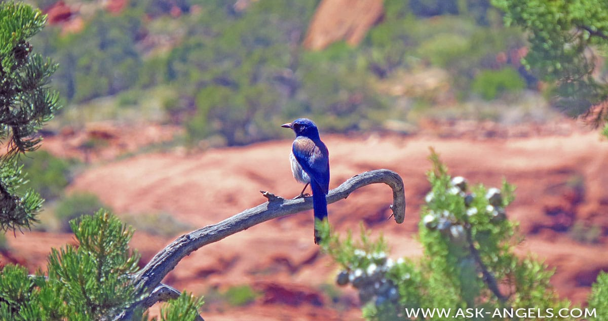 The Spiritual Meaning Of Bluebird