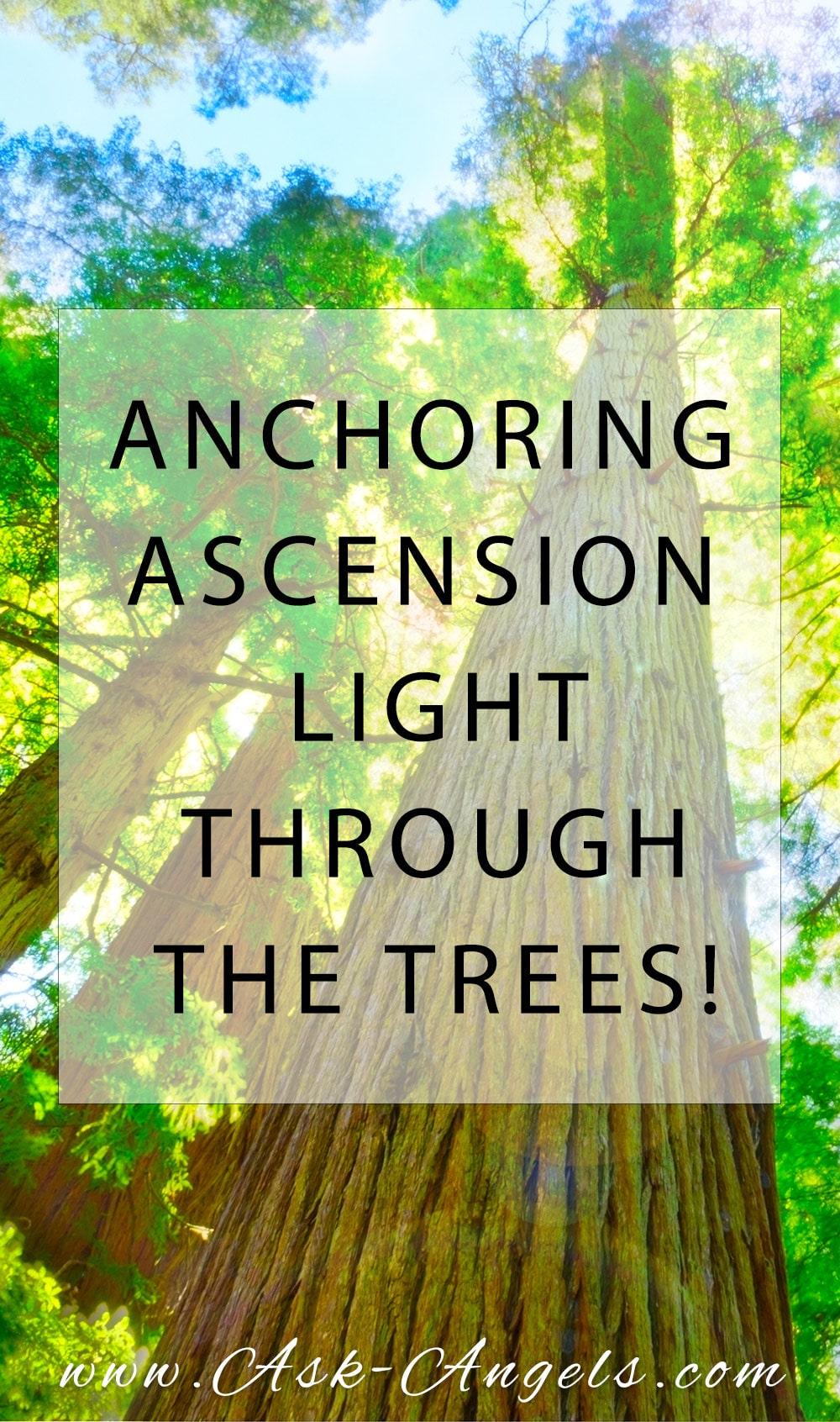 Anchoring Ascension Light Through The Trees